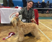 Aura Silkcroft Auroras Encore West Midlands Terrier 2016