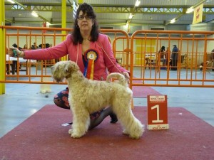 Bryony - Silkcroft Waiting For You - Silkcroft Soft Coated Wheaten Terriers 2016