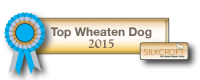 Top Wheaten Dog 2015