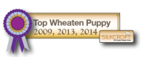 Top Wheaten Puppy 2009, 2013, 2014