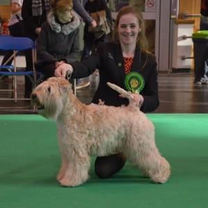 Lola Wins Terrier Group 4 at West Country 2016