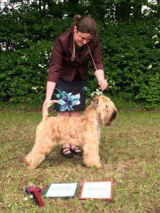 Bath 2016 - Chase - Silkcroft Soft-Coated Wheaten Terriers 2016