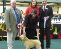 National Terrier 2016 - Aura