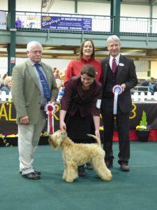 National Terrier 2016 - Aura
