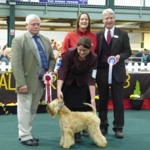 Aura Wins Puppy Stakes at National Terrier 2016