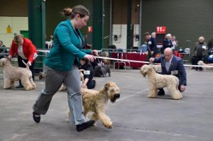 National Terrier 2016 - Chase moving