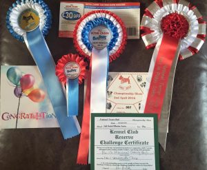 National Terrier 2016 - Rosettes