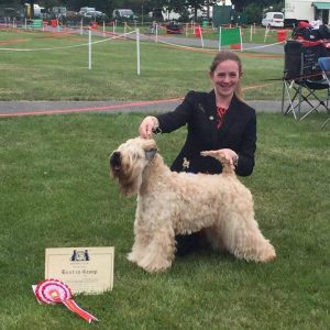 Millie Wins Terrier Group at Three Counties 2016