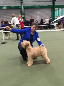 Anwyn BPIB Ashbourne 2016 - Silkcroft Soft Coated Wheaten Terriers 2016