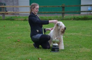 Millie RCC SCWT 2016 - Silkcroft Soft Coated Wheaten Terriers 2016