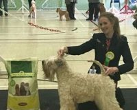Millie RBIS Terrier Club Of Devon & Cornwall 2016 - Silkcroft Soft Coated Wheaten Terriers 2016