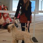 Millie WKC 2016 - Silkcroft Soft Coated Wheaten Terriers 2016