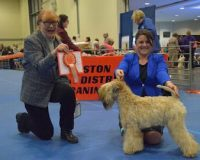 Team Silkcroft - Boston 2017 - Silkcroft Soft Coated Wheaten Terriers 2017