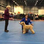 Team Silkcroft - Boston 2017 - Silkcroft Soft Coated Wheaten Terriers 2017