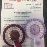 Obi Silkcroft Soft Coated Wheaten Terriers 2017 - Worcester & Malvern 2017
