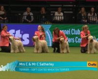 Breeders Final Crufts 2017 - Silkcroft Soft Coated Wheaten Terriers 2017