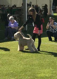 Bath 2017 - Silkcroft Soft Coated Wheaten Terriers 2017