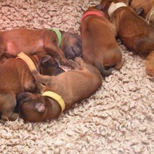 Bryony Has Puppies!