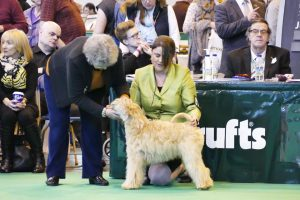 Crufts 2017 - Silkcroft Soft Coated Wheaten Terriers 2017