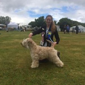 Lola Best Of Breed & TG3 At Devon County Show 2017