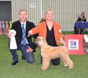 Lucas - Silkcroft Soft-Coated Wheaten Terriers 2017