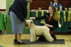 SCWTCGB OSS 2017 - Soft Coated Wheaten Terriers 2017