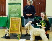 SCWTCGB OSS 2017 - Soft Coated Wheaten Terriers 2017