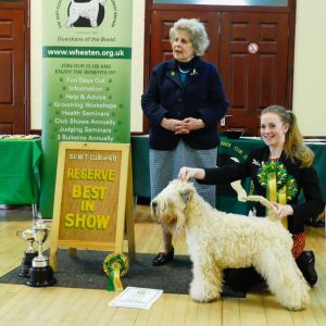 Millie RBIS at SCWTCGB Open Show South 2017