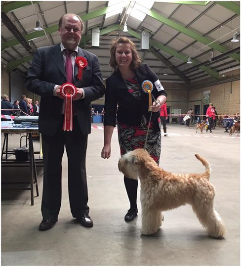 Obi Beckenham CS 2017 - Silkcroft Soft-Coated Wheaten Terriers 2017