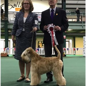 Obi Wins Puppy Stakes at National Terrier 2017