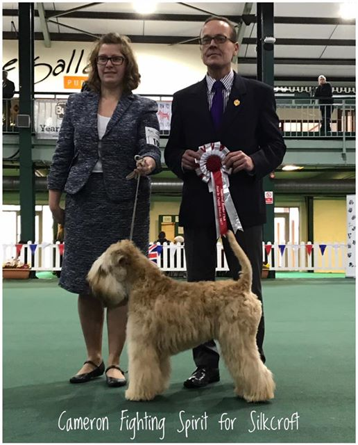 Obi at National Terrier 2017 - Silkcroft Soft-Coated Wheaten Terriers 2017