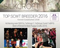 Silkcroft Soft-Coated Wheaten Terriers 2017