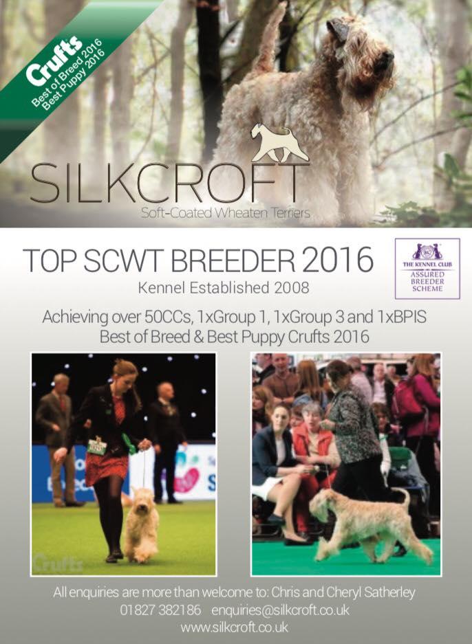 Silkcroft Soft-Coated Wheaten Terriers 2017