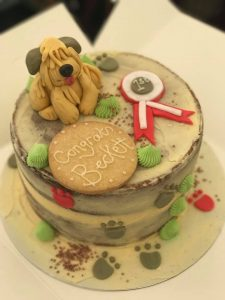 Silkcroft Cake - SCCA 2017 - Silkcroft Soft Coated Wheaten Terriers 2017
