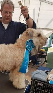 Enya - Silkcroft Soft-Coated Wheaten Terriers 2017