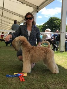 Obi - SCCA 2017 - Silkcroft Soft Coated Wheaten Terriers 2017