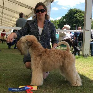 Obi Wins Best Puppy In Breed at SCCA 2017