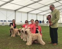 Silkcroft Breeders Team - SCCA 2017 - Silkcroft Soft Coated Wheaten Terriers 2017