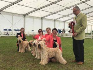 Silkcroft Breeders Team - SCCA 2017 - Silkcroft Soft Coated Wheaten Terriers 2017