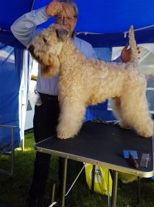 Enya Silkcroft Soft Coated Wheaten Terriers 2018