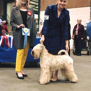 Ani Wins RCC at National Terrier 2018
