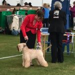 Bath 2018 - Silkcroft Soft Coated Wheaten Terriers 2018