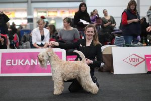 Becket World Dog Show 2017 WDS Silkcroft Soft Coated Wheaten Terriers 2017