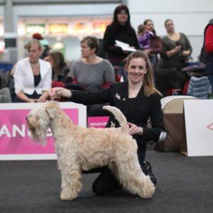 Beckett Wins At World Dog Show 2017