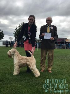 Beckett 4th CC Darlington 2017 - Silkcroft Soft Coated Wheaten Terriers 2017