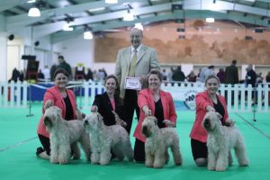 Breeders - WELKS 2018 Silkcroft Soft Coated Wheaten Terriers