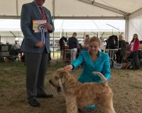 Chase Best Of Breed Windsor 2017 Silkcroft Soft Coated Wheaten Terriers 2017