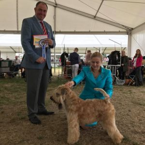 Chase BEST OF BREED at Windsor 2017