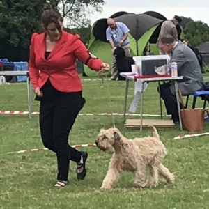 Flare Wins Puppy Group At Chesterfield 2018