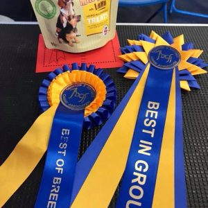 Lola BEST OF BREED and TERRIER GROUP winner at Taunton 2018